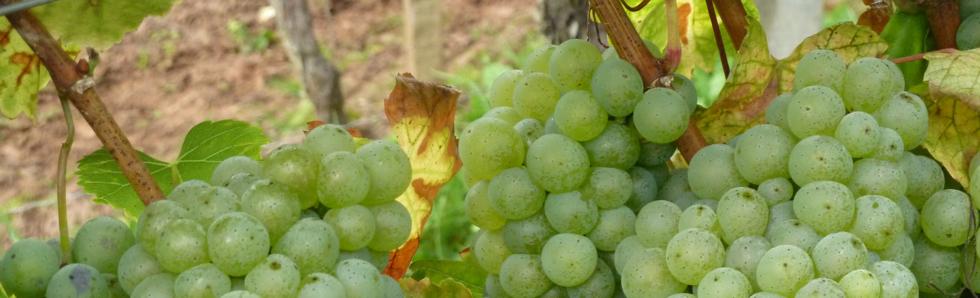 Herzlich Willkommen bei Weingut Hausknecht